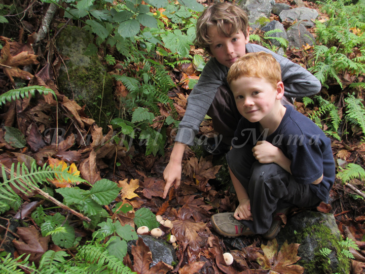 Brother and Young Son crouch near some mushrooms